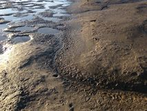 Seagull Footprints in Mud on Bottom of Receded River. Royalty Free Stock Photo