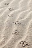 Seagull footprints in the sand stock photography