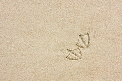 Seagull footprints on sand. A pair of seagull footprints left on wet sand on the beach Stock Photography