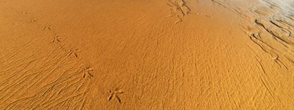 Seagull footsteps in Malibu. California Royalty Free Stock Images