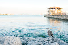 Seagull in the foreground. In the background is a view of the Bosphorus and the pier in Istanbul, Turkey. Royalty Free Stock Photography