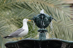 A seagull on a fountain Stock Photography