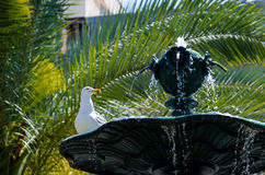 Seagull on a fountain Stock Image
