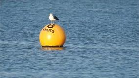 Seagull frajer odpoczywa na nabrzeżnym boja nadmorski zbiory wideo