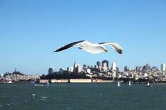 seagull Francisco SAN Στοκ Φωτογραφίες
