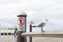 Seagull and friend. On the bar royalty free stock image