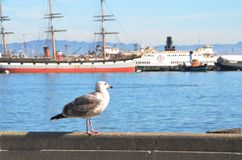 Seagull in front of boats in San Francisco Bay. A seagull standing on a rail overlooking large boats in the San Francisco Bay in California Stock Image