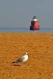 Seagull  in Front of Lighthouse Royalty Free Stock Photo