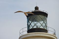 Seagull in front of Lighthouse Stock Images