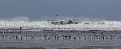 Seagull gathering Royalty Free Stock Photos