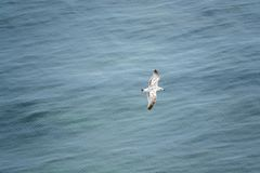 seagull glides over the blue sea and is photographed from above royalty free stock images