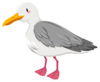 Seagull with gray and white feather. Illustration vector illustration