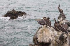 Seagull grupowy odpoczywać fotografia royalty free