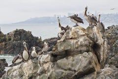 Seagull grupowy odpoczywać zdjęcia stock