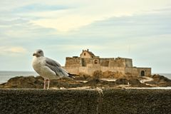 Seagull guarding the fortress in France royalty free stock images