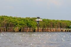 Seagull 1. Gulls at sea, many lives royalty free stock photography