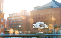 Seagull on handrail Royalty Free Stock Images