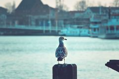 Seagull at a Harbor looking arround stock image