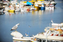 Seagull in a harbor Stock Photo