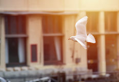Seagull in the harbor, sunset or sunrise Stock Photos