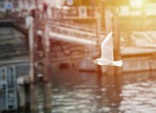 Seagull in the harbor, sunset or sunrise Stock Images