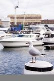 Seagull in the harbour Stock Images