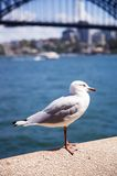 Seagull in the harbour Stock Photo