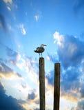 Seagull HDR Στοκ φωτογραφία με δικαίωμα ελεύθερης χρήσης