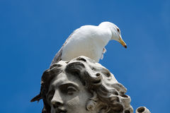 Seagull on head of statue in capital Rome. Italy Stock Images
