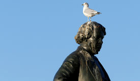 Seagull on head of Thomas D`Arcy McGee Statue Stock Images