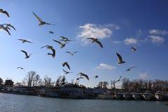 Seagull Hey thoes πάλη για την πάλη αέρα anf για τα τρόφιμα στοκ φωτογραφίες