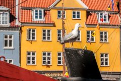 Seagull on historic ship in front of colorful house Stock Photography