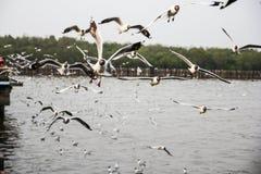 Seagull Home. Is at Bangpu inThailand stock photo