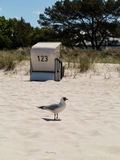 Seagull and hooded beach chair Stock Photo