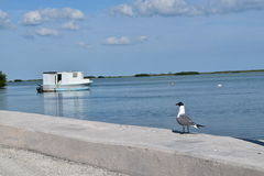 Seagull and Houseboat Royalty Free Stock Photography