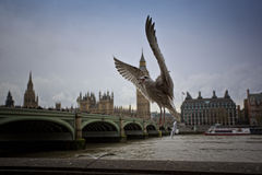 Seagull. Houses of Parliament and a flying seagull Royalty Free Stock Images