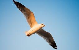Seagull i BangPu, Thailand Arkivbild