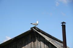 Seagull i byn Royaltyfri Foto