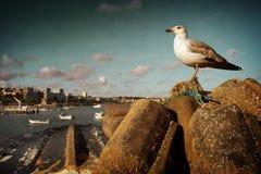 Seagull i Cascais Royaltyfri Fotografi
