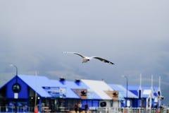 Seagull i den Akaroa hamnen, Nya Zeeland royaltyfria foton
