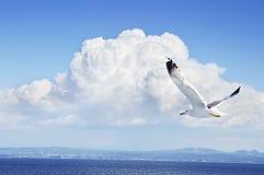 Seagull i en blåttsky Royaltyfri Fotografi