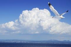 Seagull i en blåttsky Arkivfoto