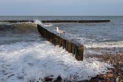 Seagull i en fiskeport I bakgrunden av fisknät och royaltyfria bilder
