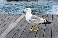 Seagull i en hamn, nära havet Royaltyfri Foto