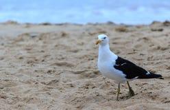 Seagull i en strand royaltyfri foto