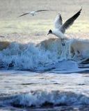 Seagull i fala Zdjęcie Royalty Free