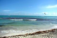 Seagull i flykten över stranden royaltyfria foton