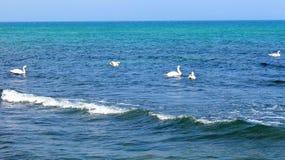 Seagull i flykten i himlen Arkivfoto