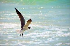 Seagull i flykten med havbackdop Fotografering för Bildbyråer