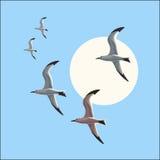 Seagull i flykten mot den blåa himlen Stock Illustrationer